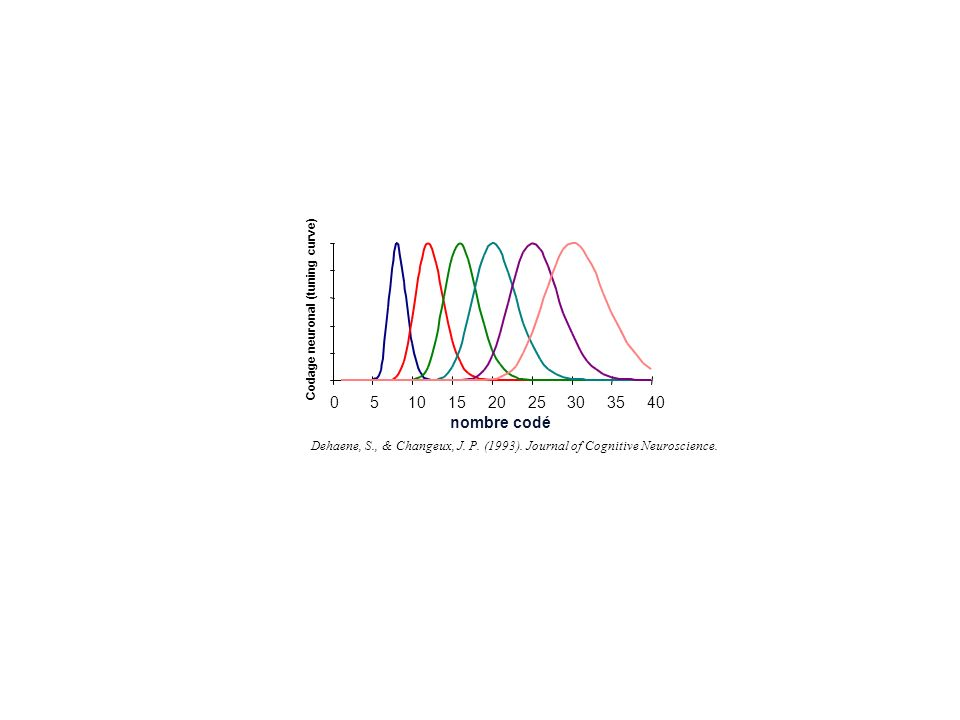 5 10. 15. 20. 25. 30. 35. 40. Codage neuronal (tuning curve) nombre codé.
