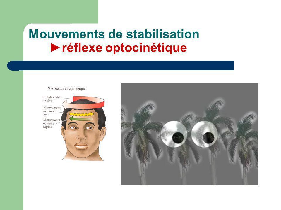 Mouvements de stabilisation ►réflexe optocinétique