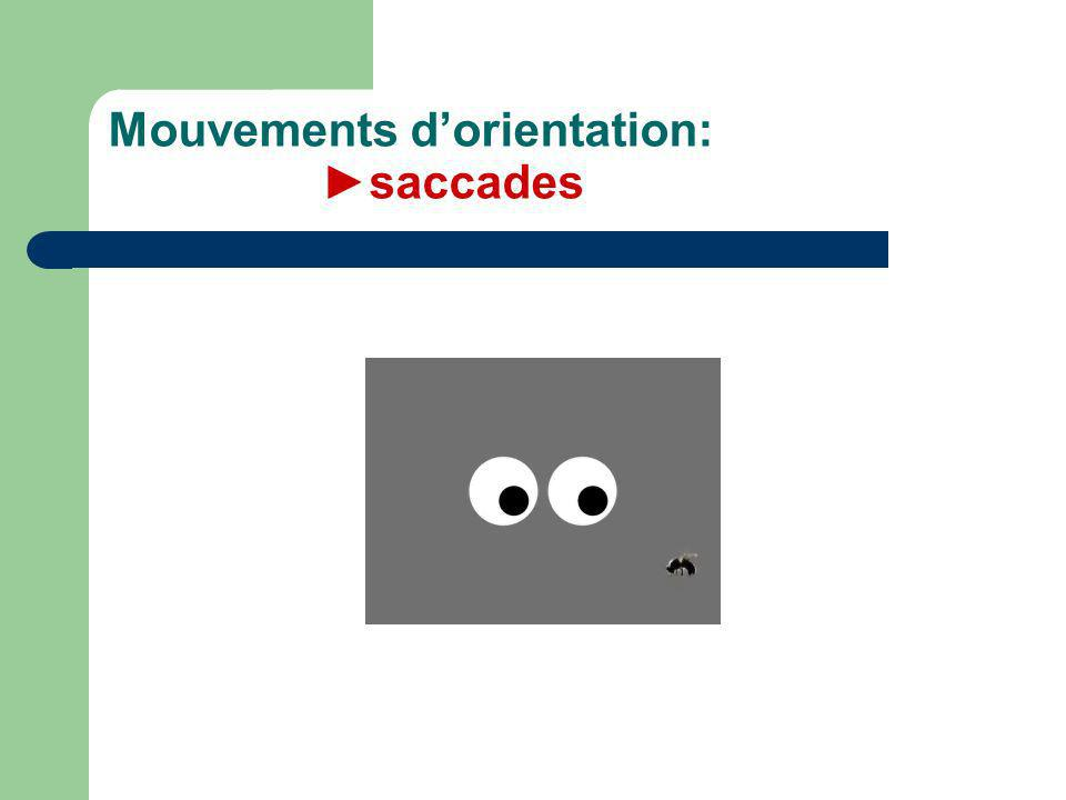 Mouvements d'orientation: ►saccades