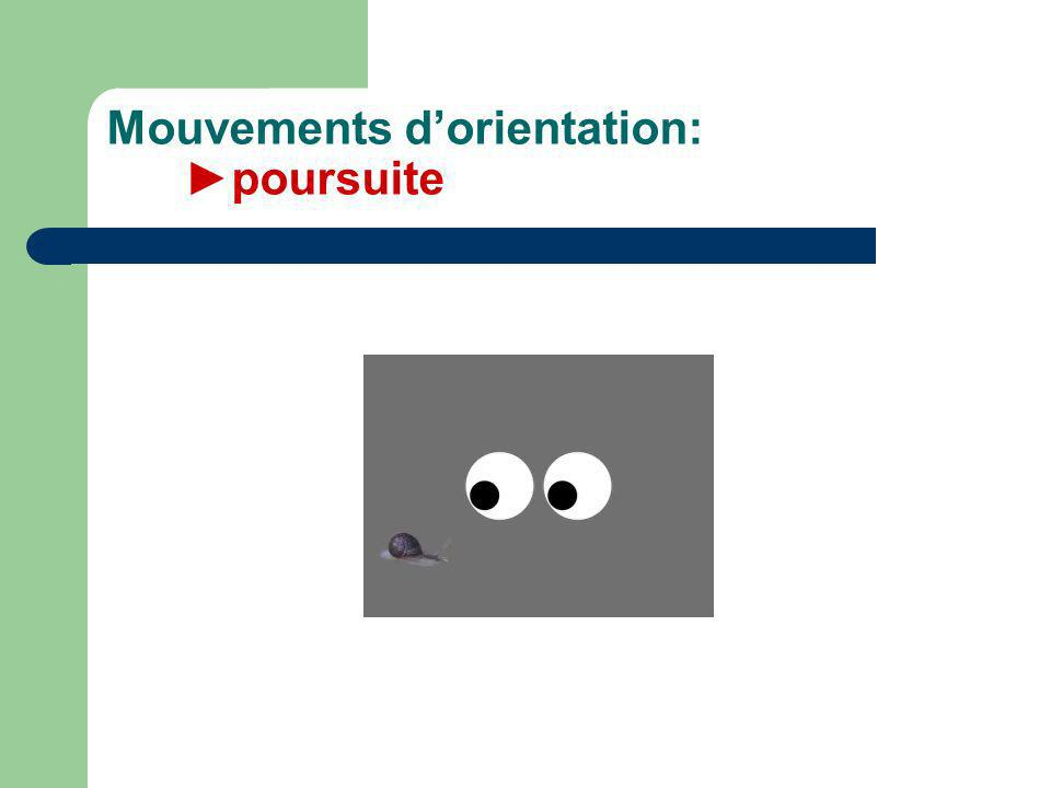 Mouvements d'orientation: ►poursuite