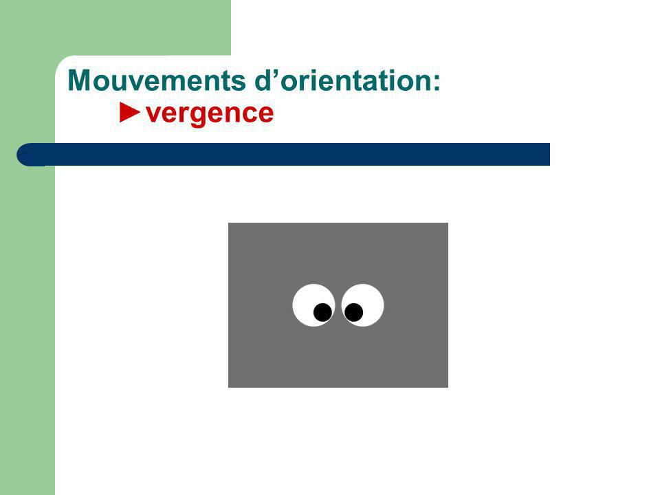 Mouvements d'orientation: ►vergence
