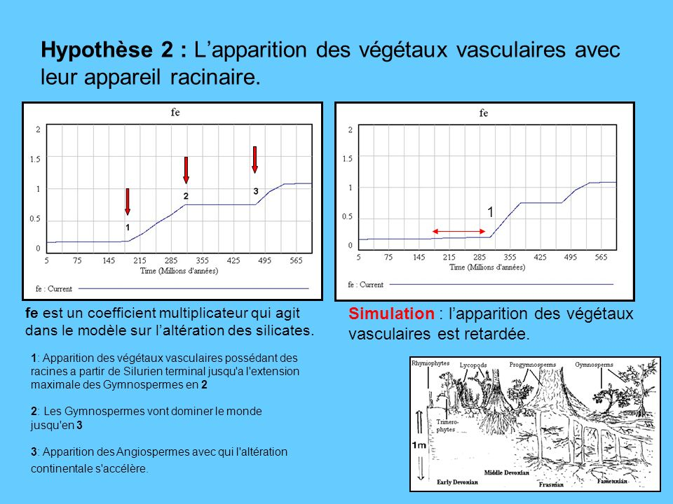 Hypothèse 2 : L'apparition des végétaux vasculaires avec leur appareil racinaire.