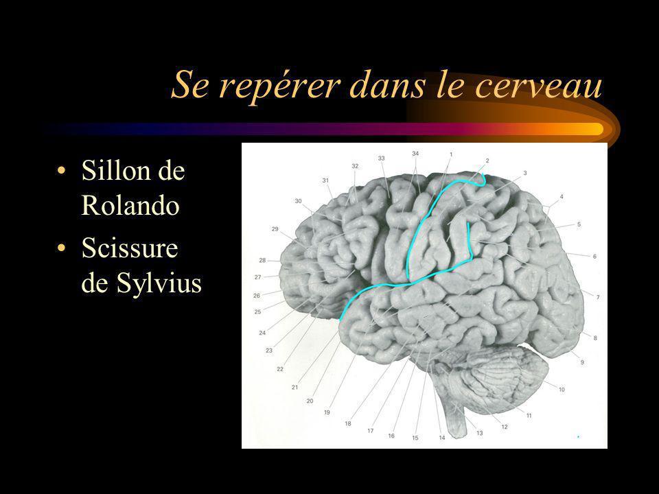 Se repérer dans le cerveau