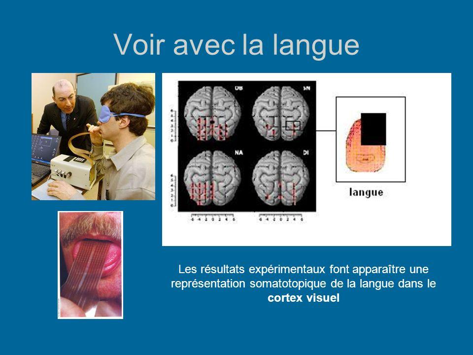 Voir avec la langue Les résultats expérimentaux font apparaître une représentation somatotopique de la langue dans le cortex visuel.