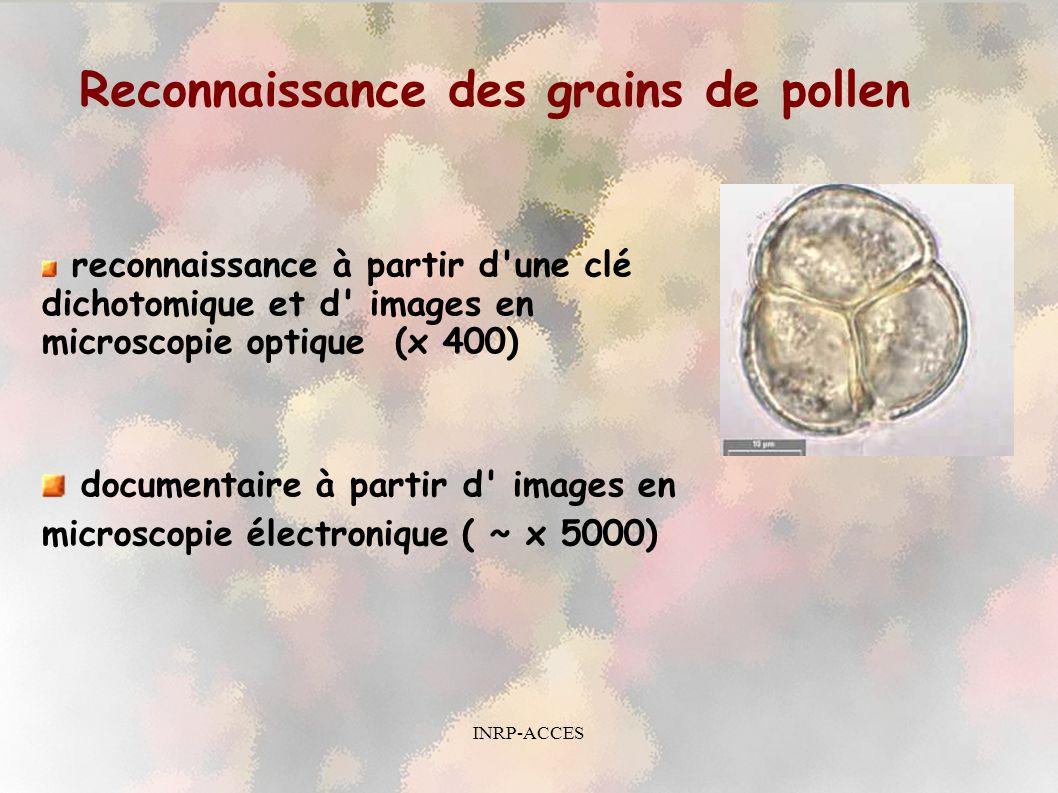 Reconnaissance des grains de pollen