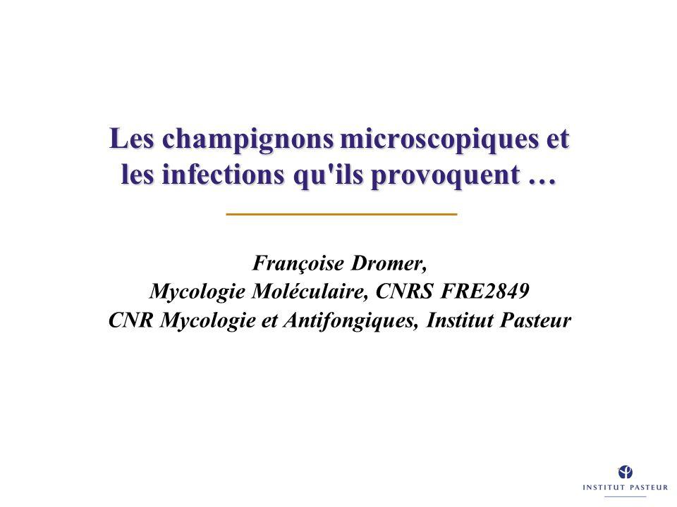 Les champignons microscopiques et les infections qu ils provoquent …