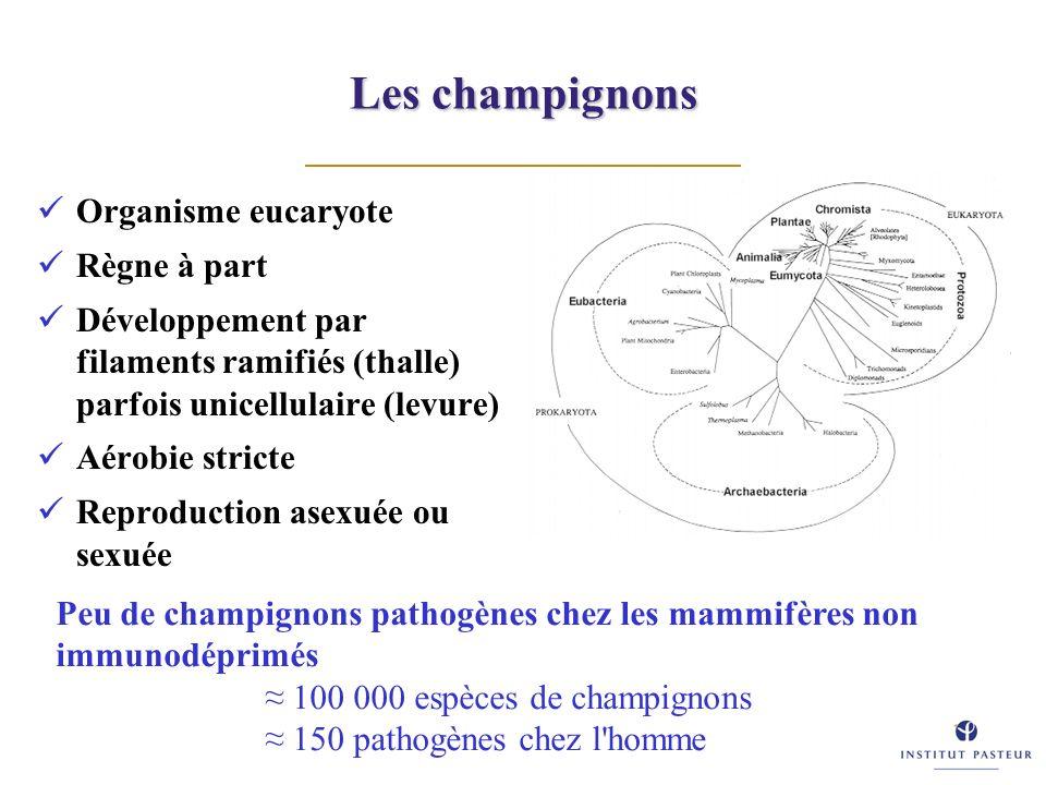 Les champignons Organisme eucaryote Règne à part