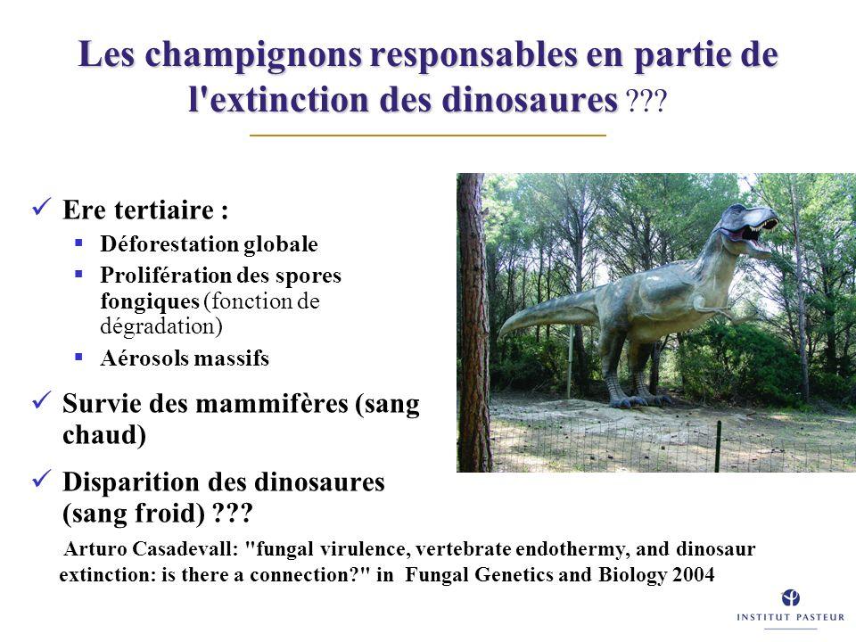 Les champignons responsables en partie de l extinction des dinosaures