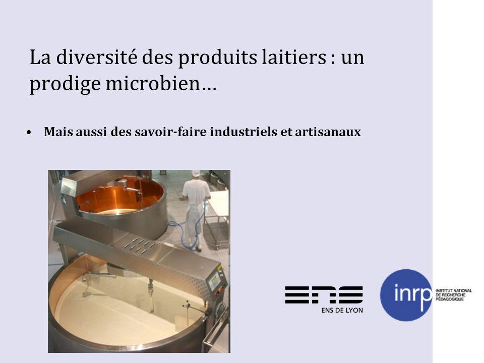 La diversité des produits laitiers : un prodige microbien…