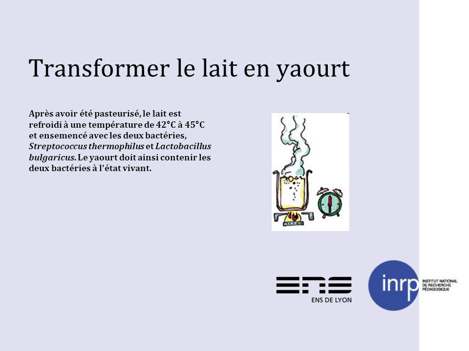 Transformer le lait en yaourt