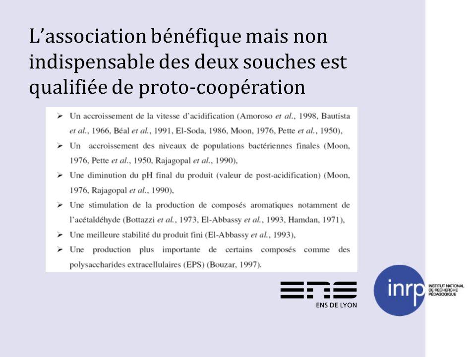 L'association bénéfique mais non indispensable des deux souches est qualifiée de proto-coopération