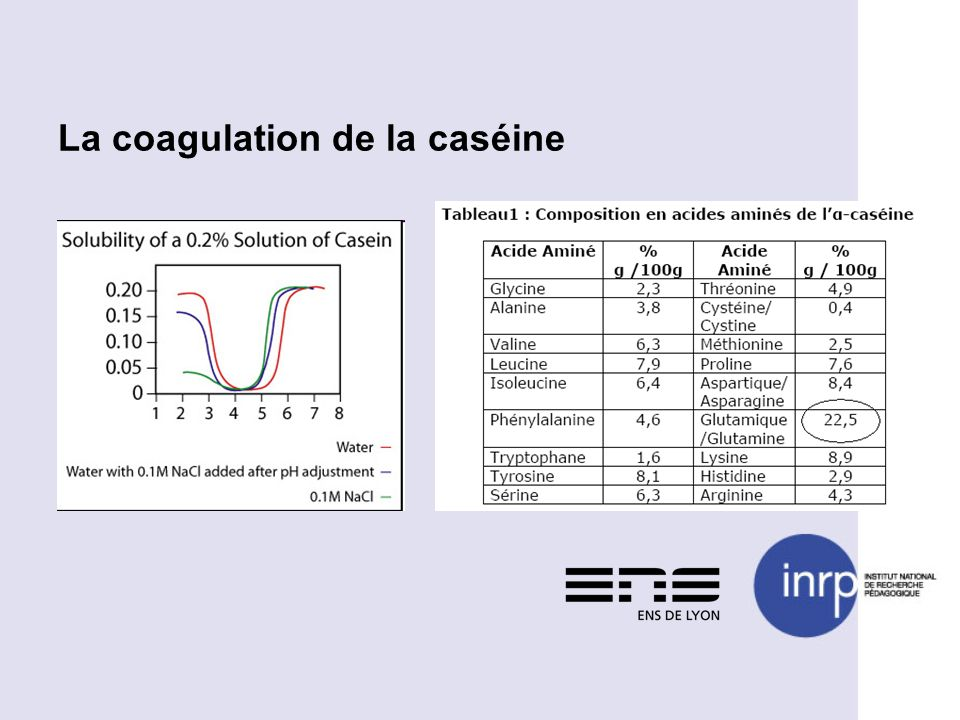 La coagulation de la caséine