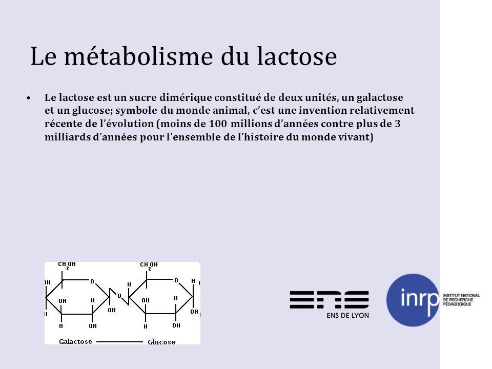 Le métabolisme du lactose