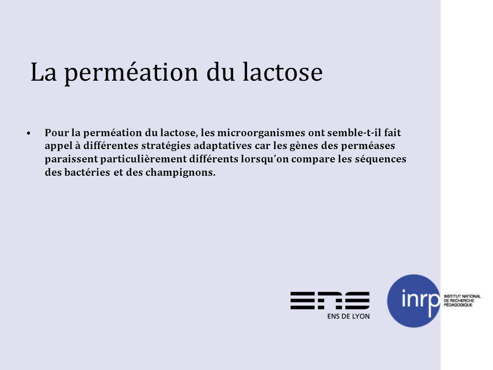 La perméation du lactose