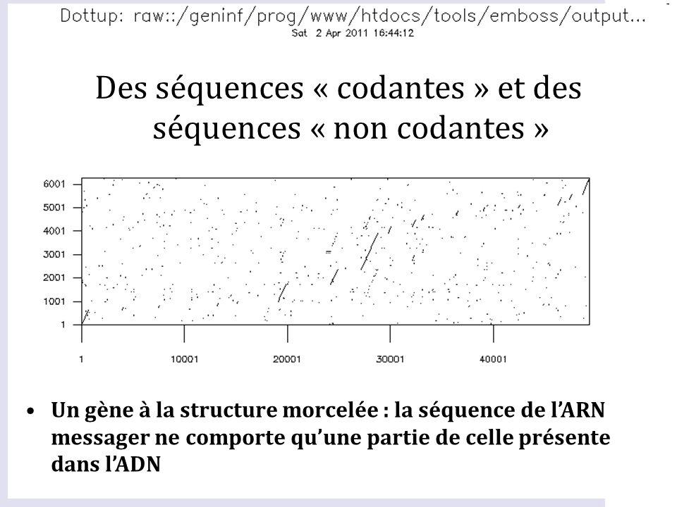 Des séquences « codantes » et des séquences « non codantes »