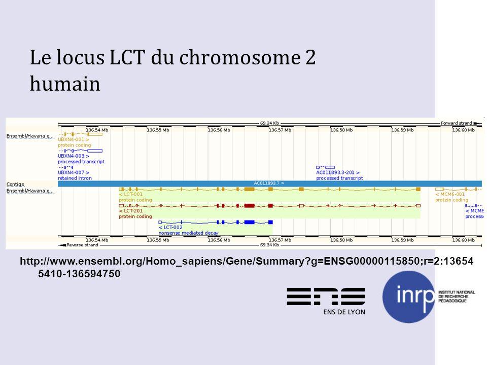 Le locus LCT du chromosome 2 humain