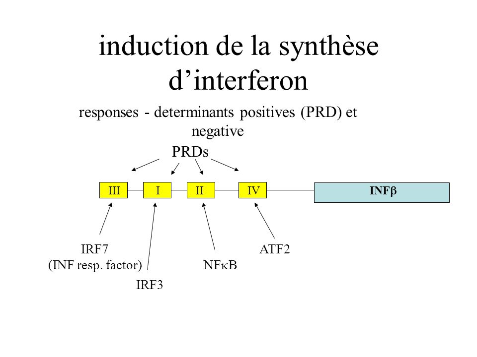 induction de la synthèse d'interferon