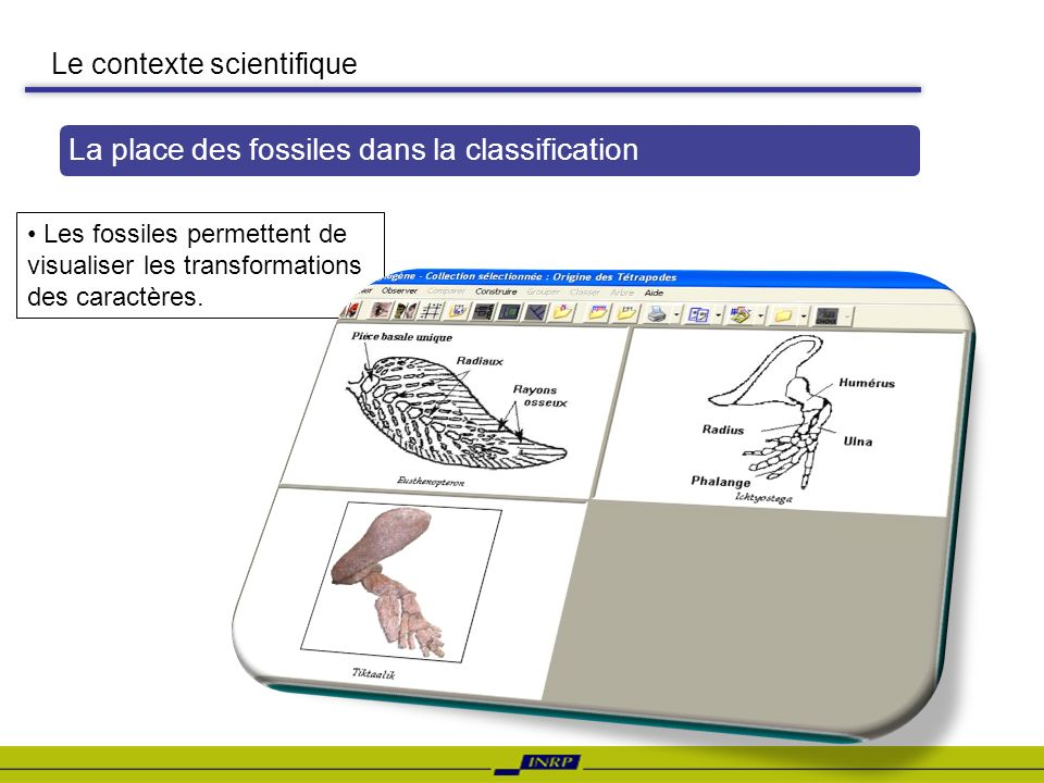 La place des fossiles dans la classification