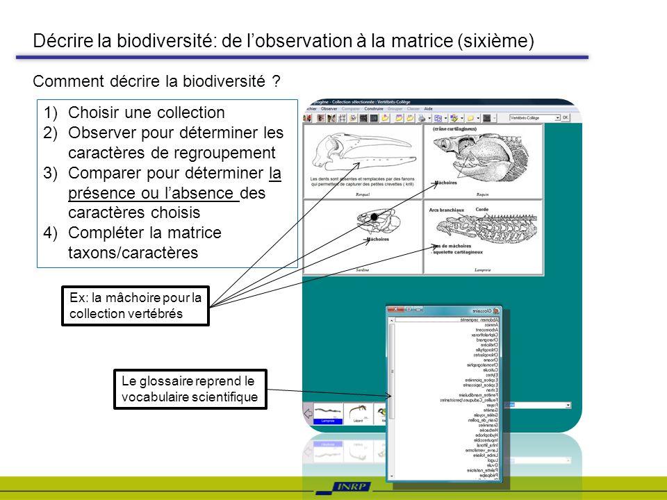 Décrire la biodiversité: de l'observation à la matrice (sixième)