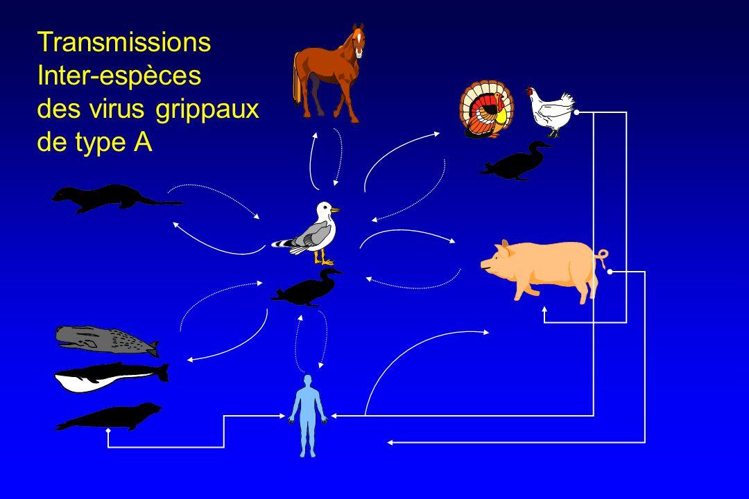 Transmissions Inter-espèces des virus grippaux de type A