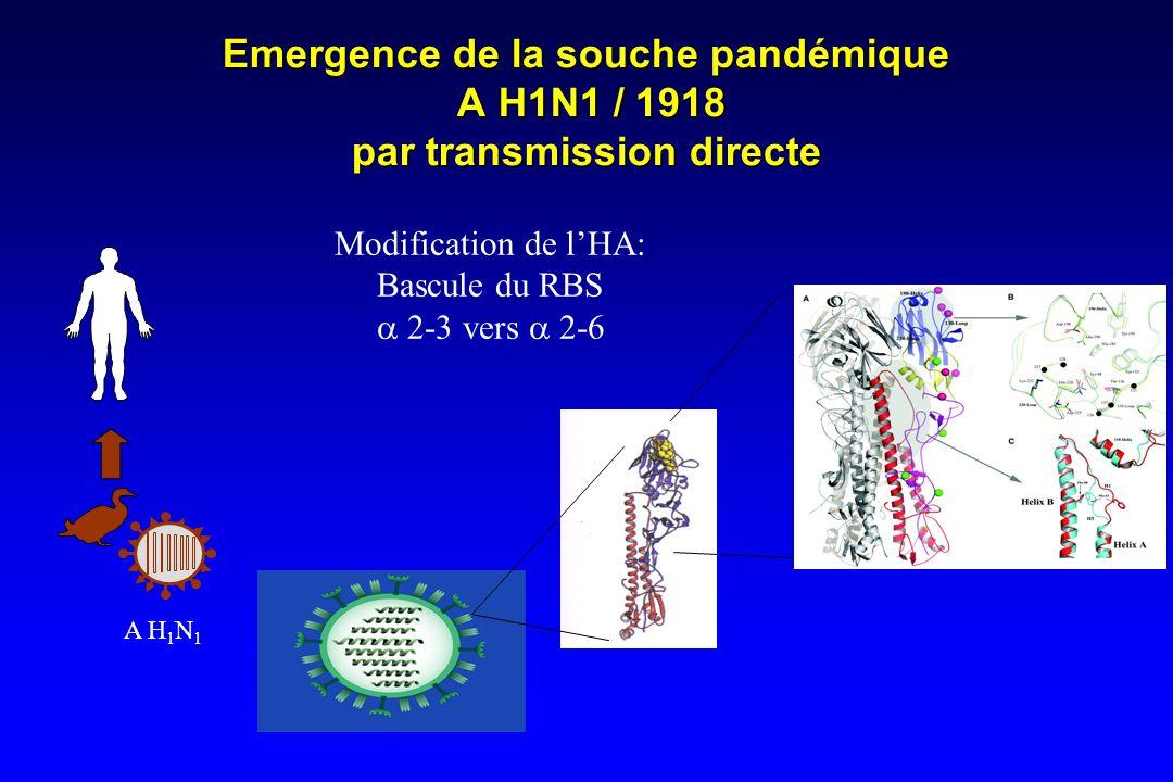 Emergence de la souche pandémique A H1N1 / 1918 par transmission directe