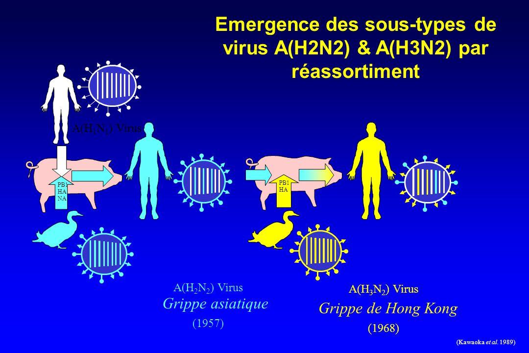 Emergence des sous-types de virus A(H2N2) & A(H3N2) par réassortiment