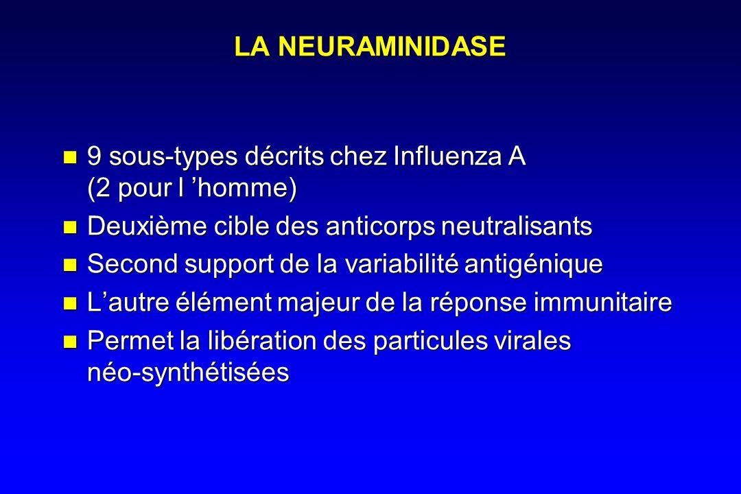 LA NEURAMINIDASE 9 sous-types décrits chez Influenza A (2 pour l 'homme) Deuxième cible des anticorps neutralisants.