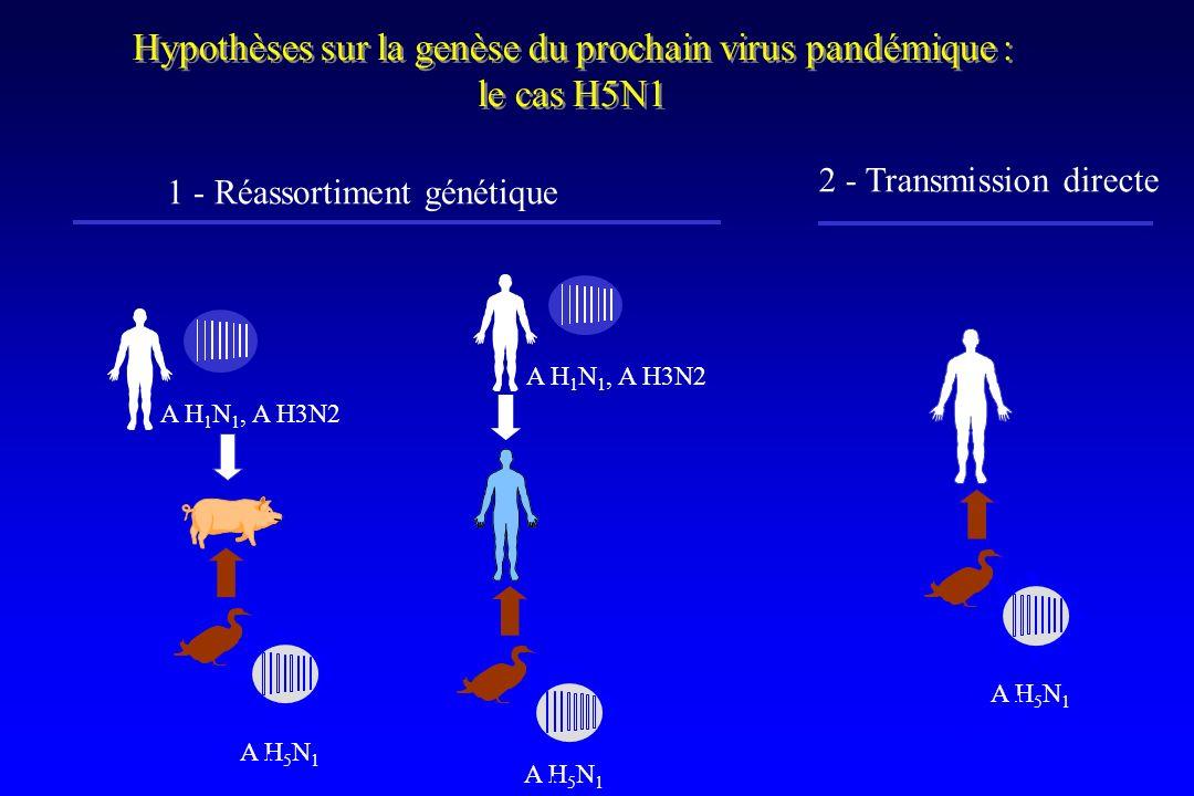 Hypothèses sur la genèse du prochain virus pandémique : le cas H5N1