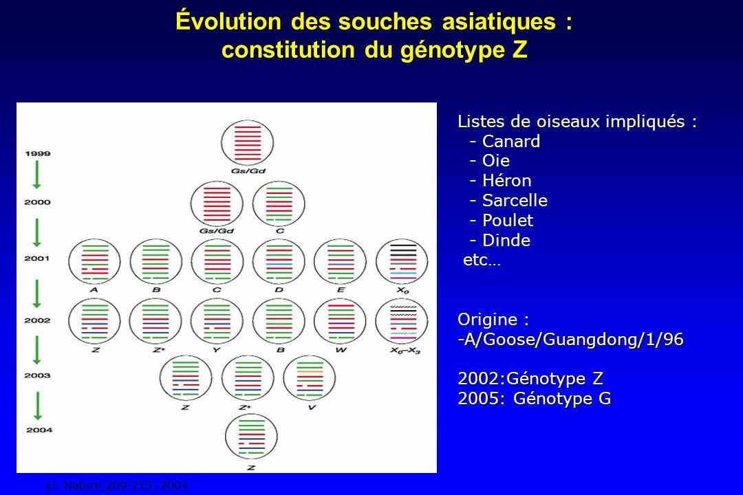 Évolution des souches asiatiques : constitution du génotype Z