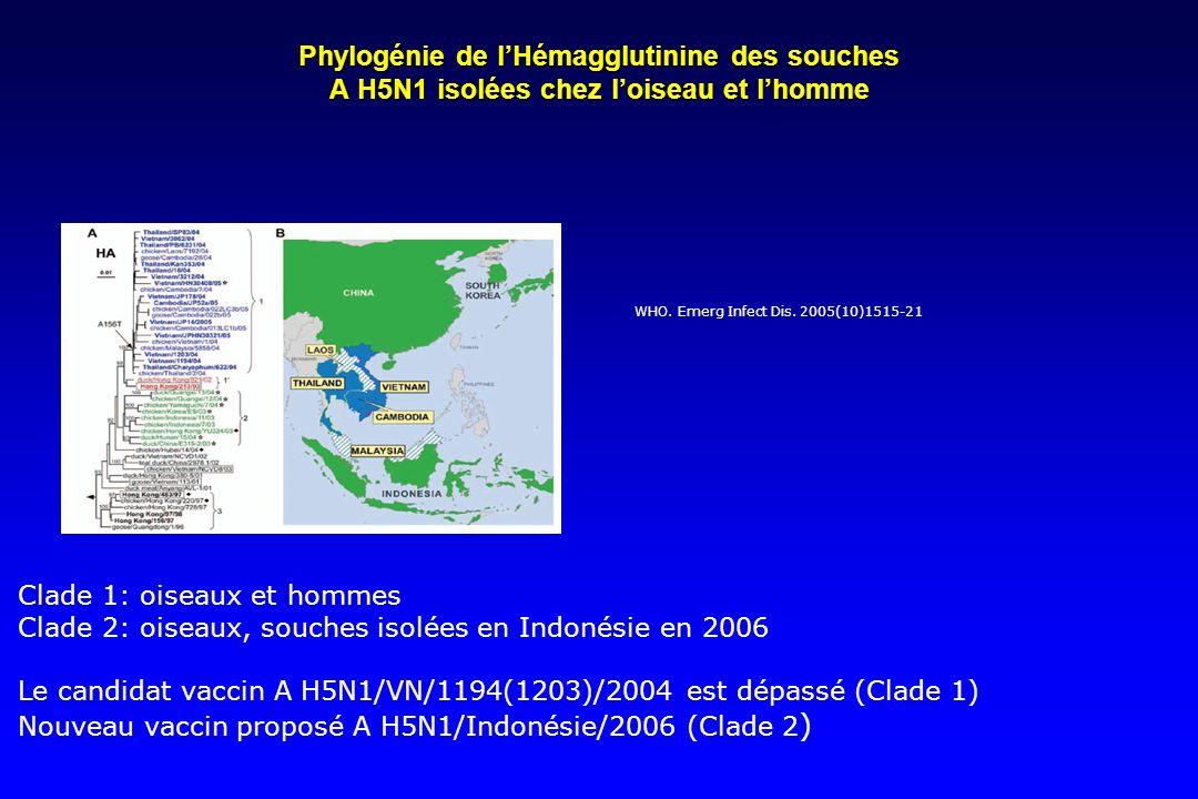 Phylogénie de l'Hémagglutinine des souches A H5N1 isolées chez l'oiseau et l'homme