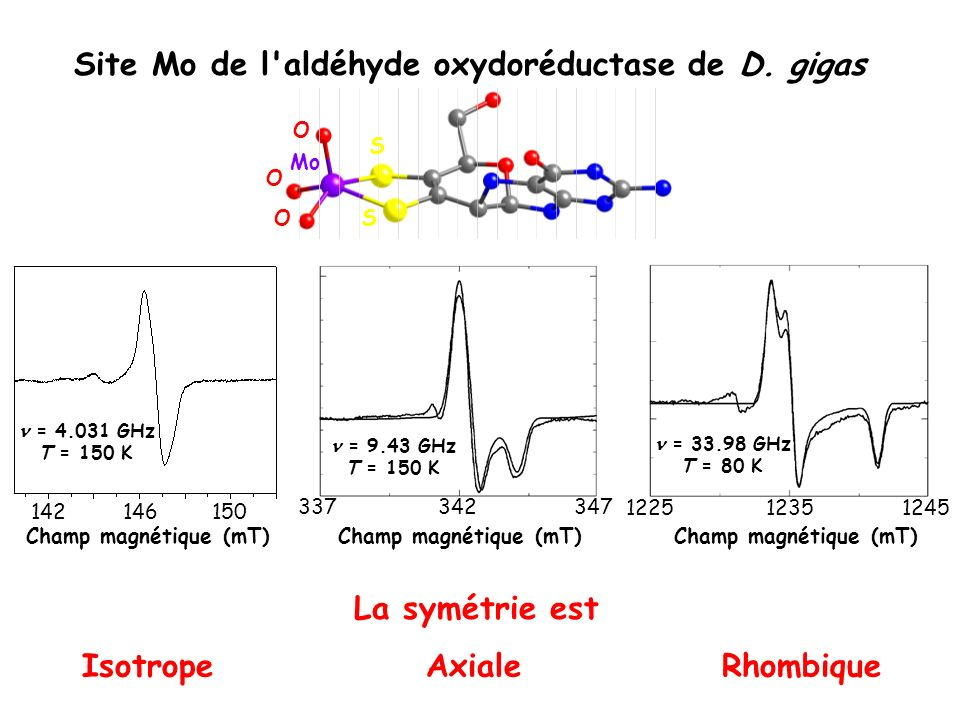 Site Mo de l aldéhyde oxydoréductase de D. gigas