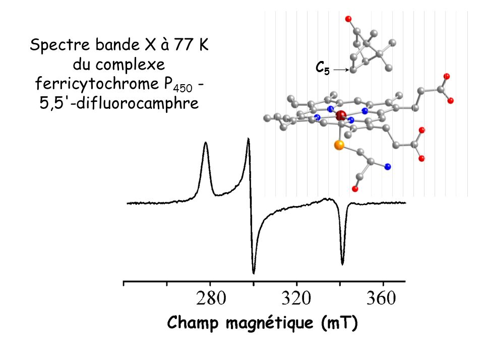 Spectre bande X à 77 K du complexe ferricytochrome P450 - 5,5 -difluorocamphre