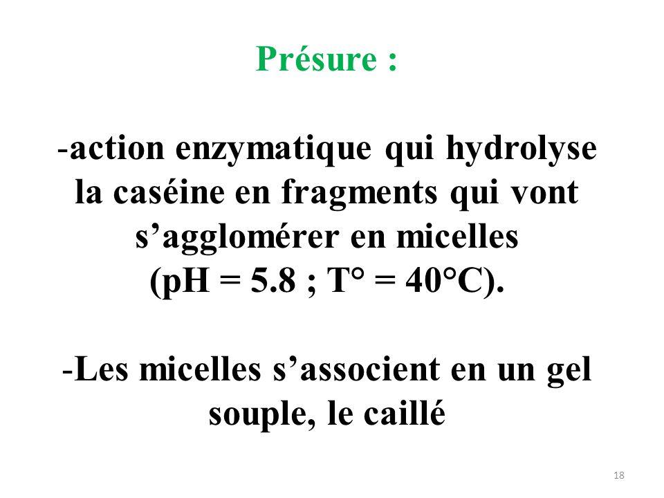 Les micelles s'associent en un gel souple, le caillé
