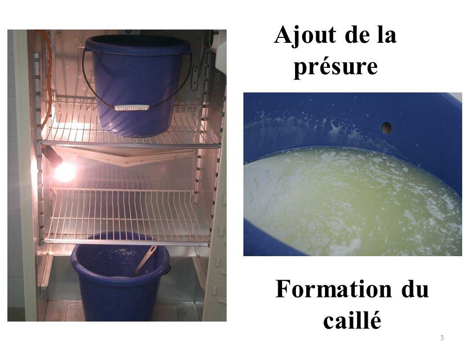 Ajout de la présure Formation du caillé