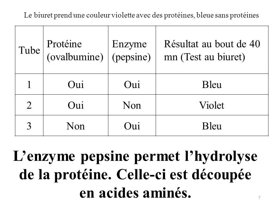 Le biuret prend une couleur violette avec des protéines, bleue sans protéines