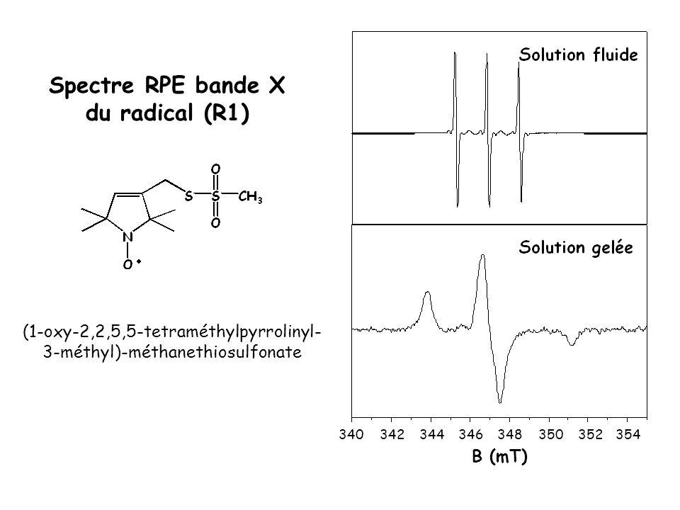 Spectre RPE bande X du radical (R1)
