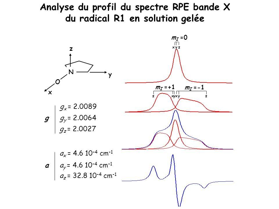 Analyse du profil du spectre RPE bande X du radical R1 en solution gelée
