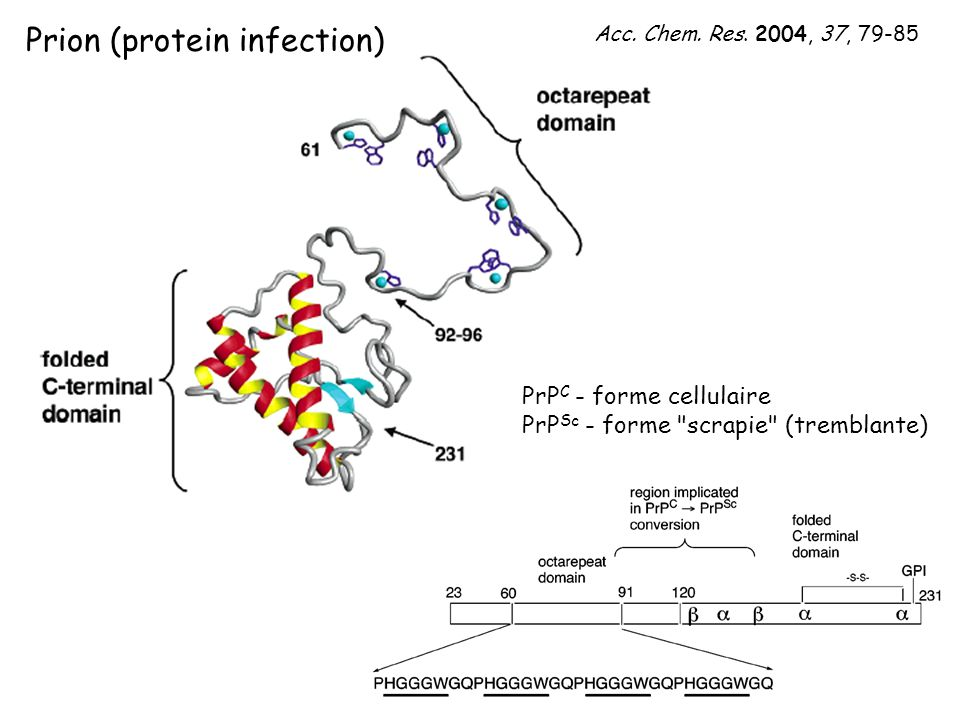 Prion (protein infection)