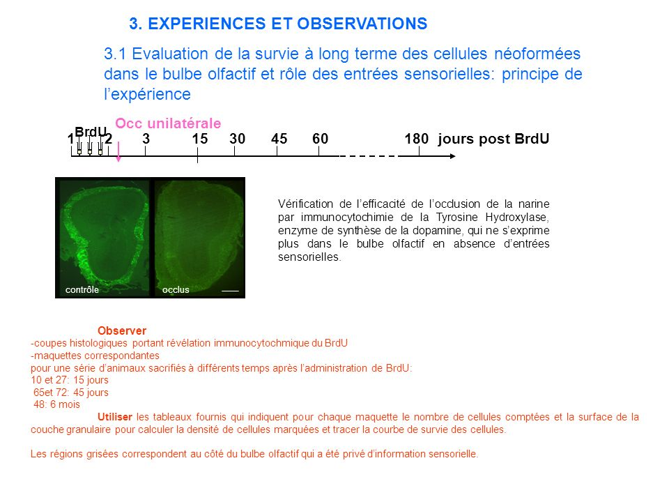 3. EXPERIENCES ET OBSERVATIONS