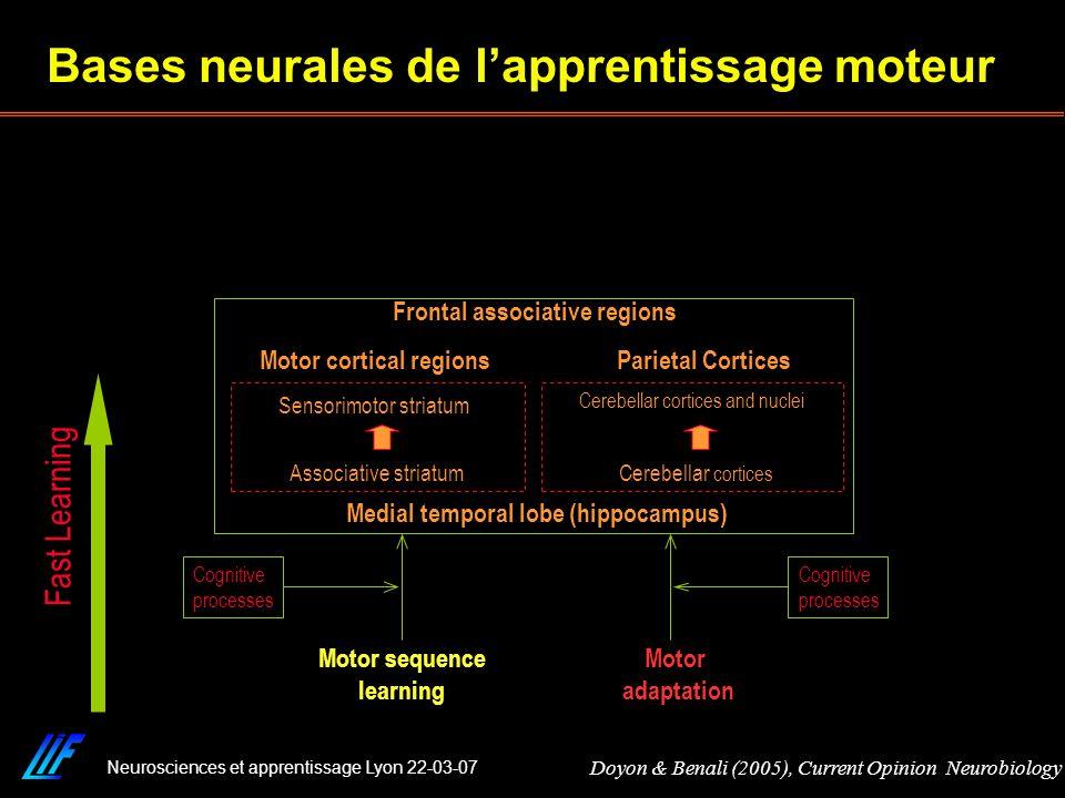 Bases neurales de l'apprentissage moteur