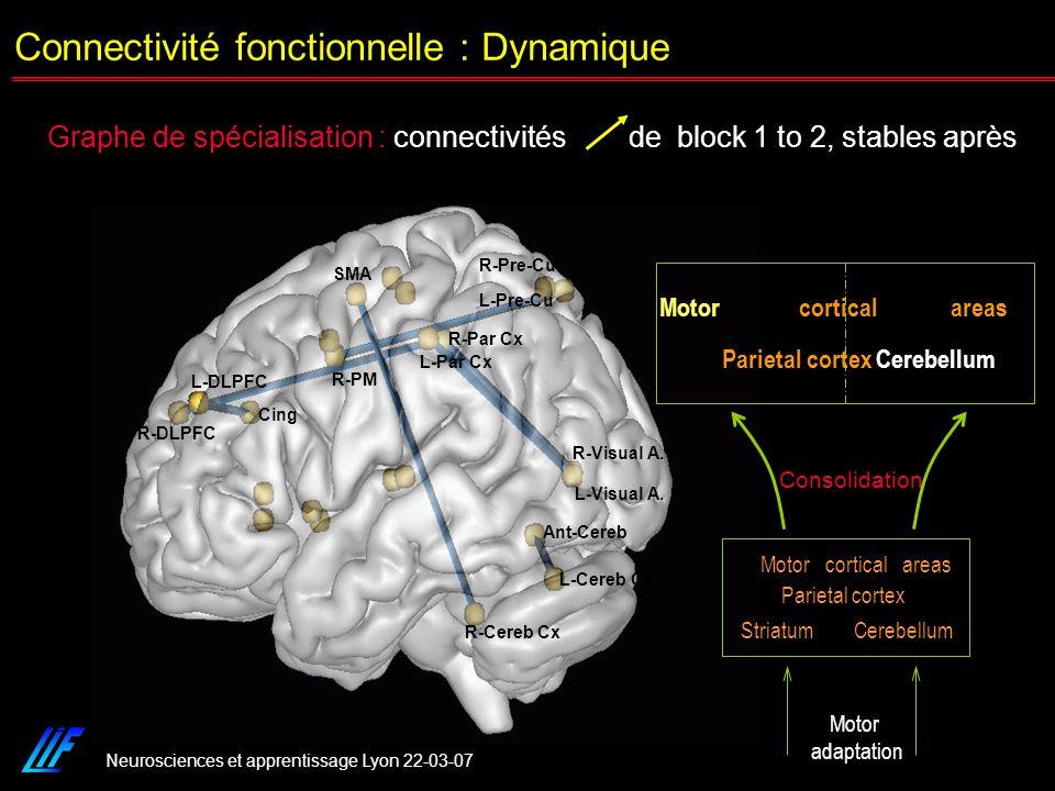 Connectivité fonctionnelle : Dynamique