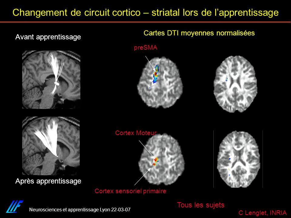 Changement de circuit cortico – striatal lors de l'apprentissage