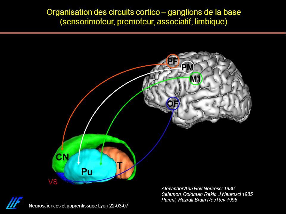 Organisation des circuits cortico – ganglions de la base (sensorimoteur, premoteur, associatif, limbique)