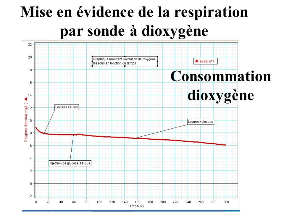 Mise en évidence de la respiration par sonde à dioxygène