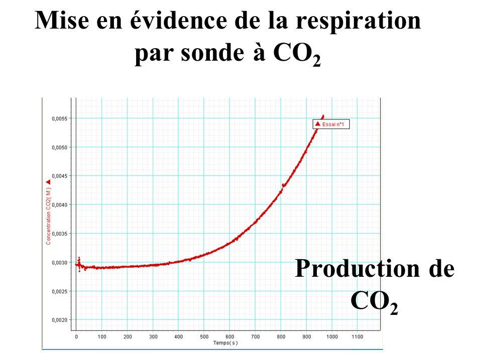 Mise en évidence de la respiration par sonde à CO2