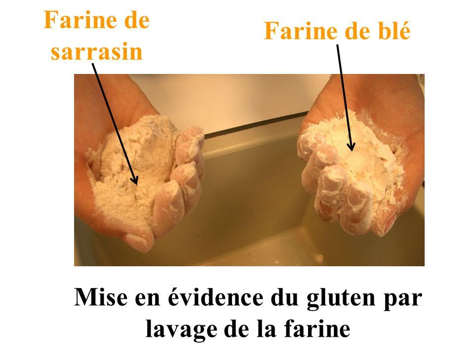 Mise en évidence du gluten par lavage de la farine