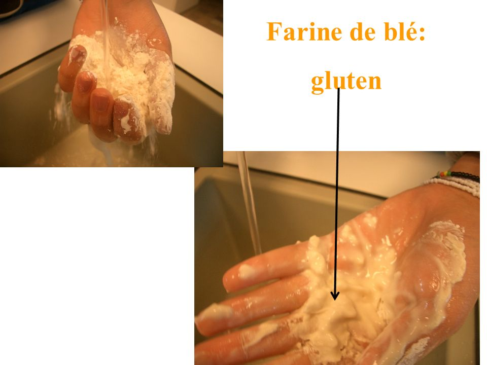 Farine de blé: gluten