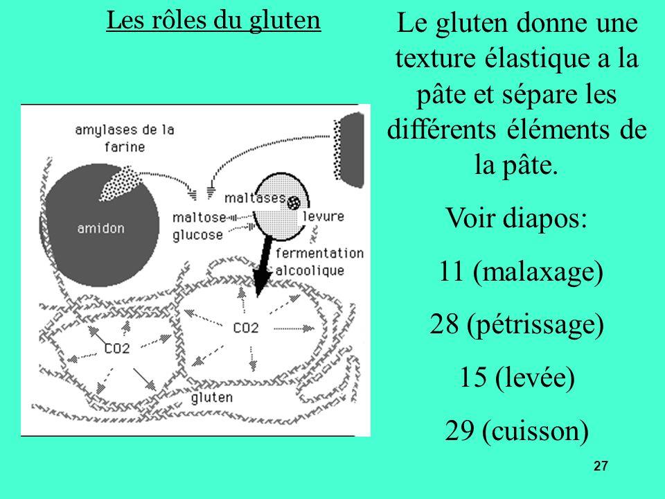 Les rôles du gluten Le gluten donne une texture élastique a la pâte et sépare les différents éléments de la pâte.