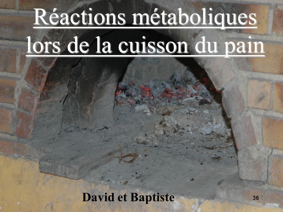 Réactions métaboliques lors de la cuisson du pain