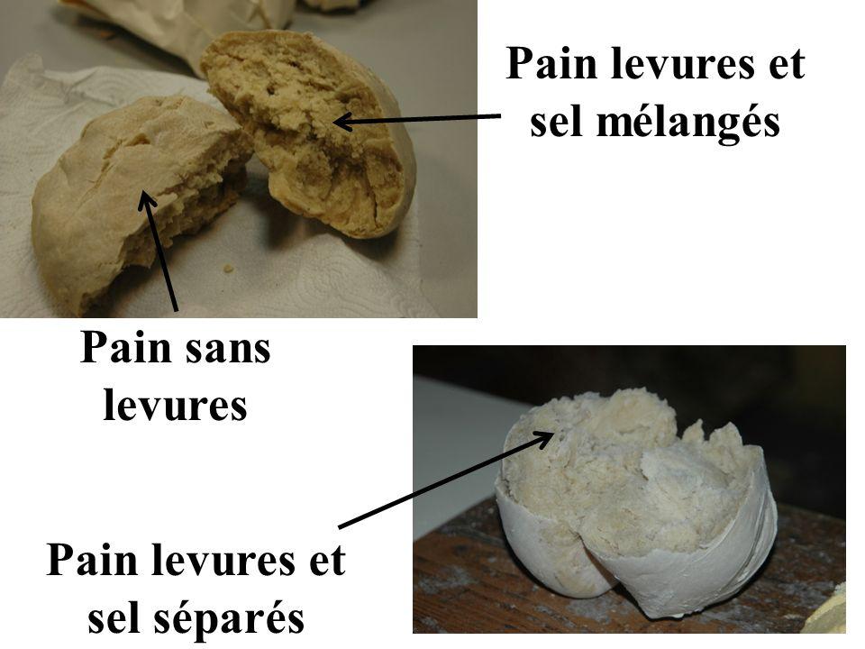 Pain levures et sel mélangés Pain levures et sel séparés